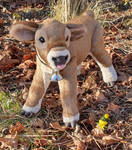 Margery the Jersey plush calf