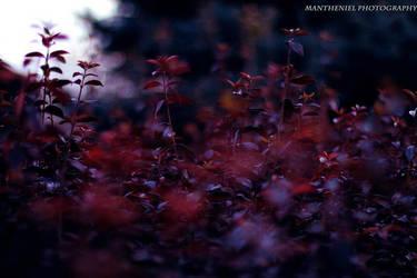 Colors by LucreciaMortishia
