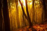 Autumn Sunrise by LucreciaMortishia