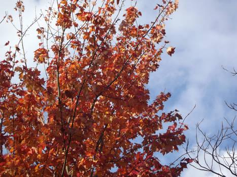 Autumn's Flame
