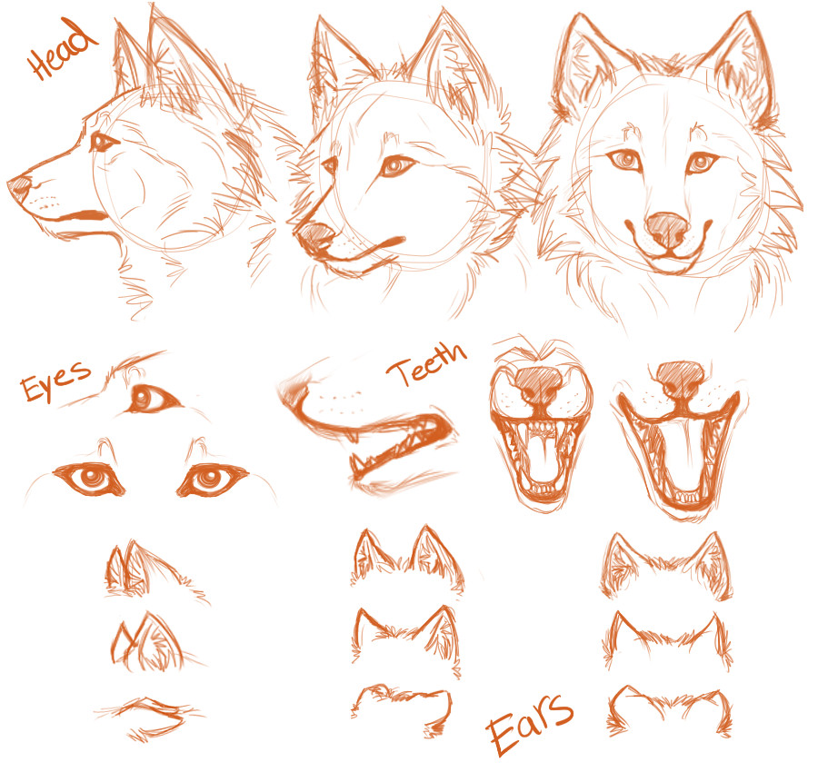 Wolf Anatomy  Body Types amp Fur  Animal Corner