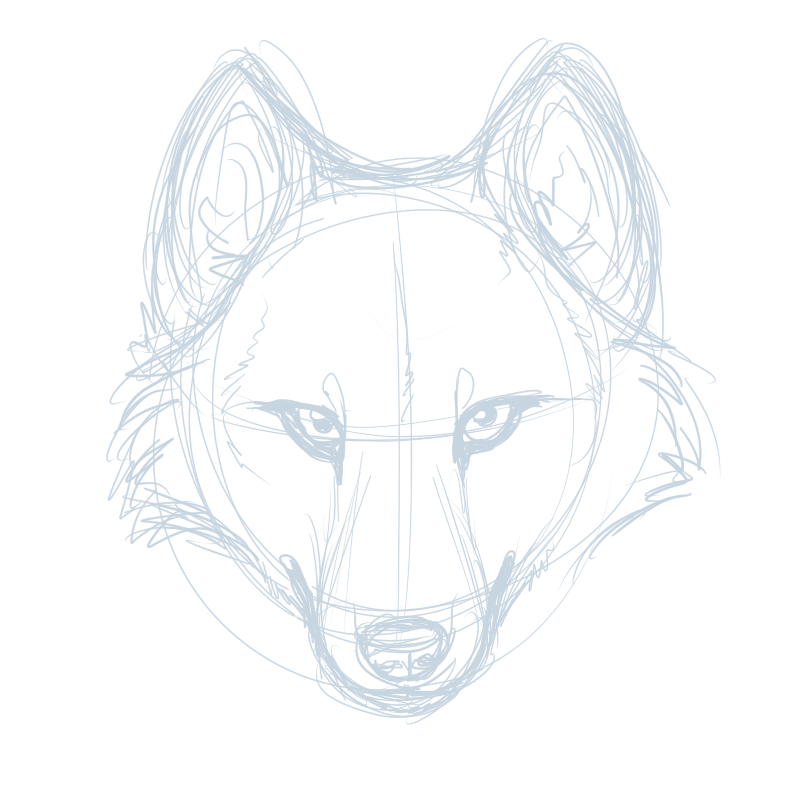 Anime Wolf Head Drawings How to Draw a Wolf Head Wolf