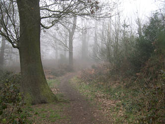 Foggy Trail 1 by stevesm-stock