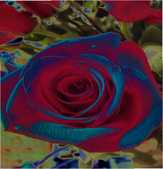 red roses can be blue by kjfeathers on deviantart