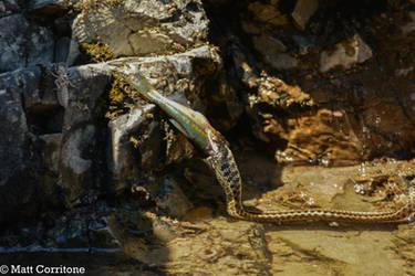 Fishing Snake