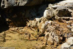 Fishing Snake 3