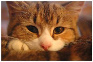 the cat by stratjara