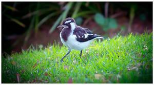 Little-bird-on-the-grass by catchaca1