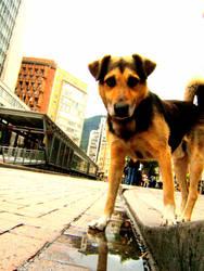 Perro callejero en la Jimenez by esehachezeta