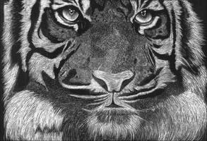 Scrapeboard Tiger