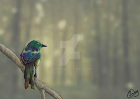 Morningmist Magpie