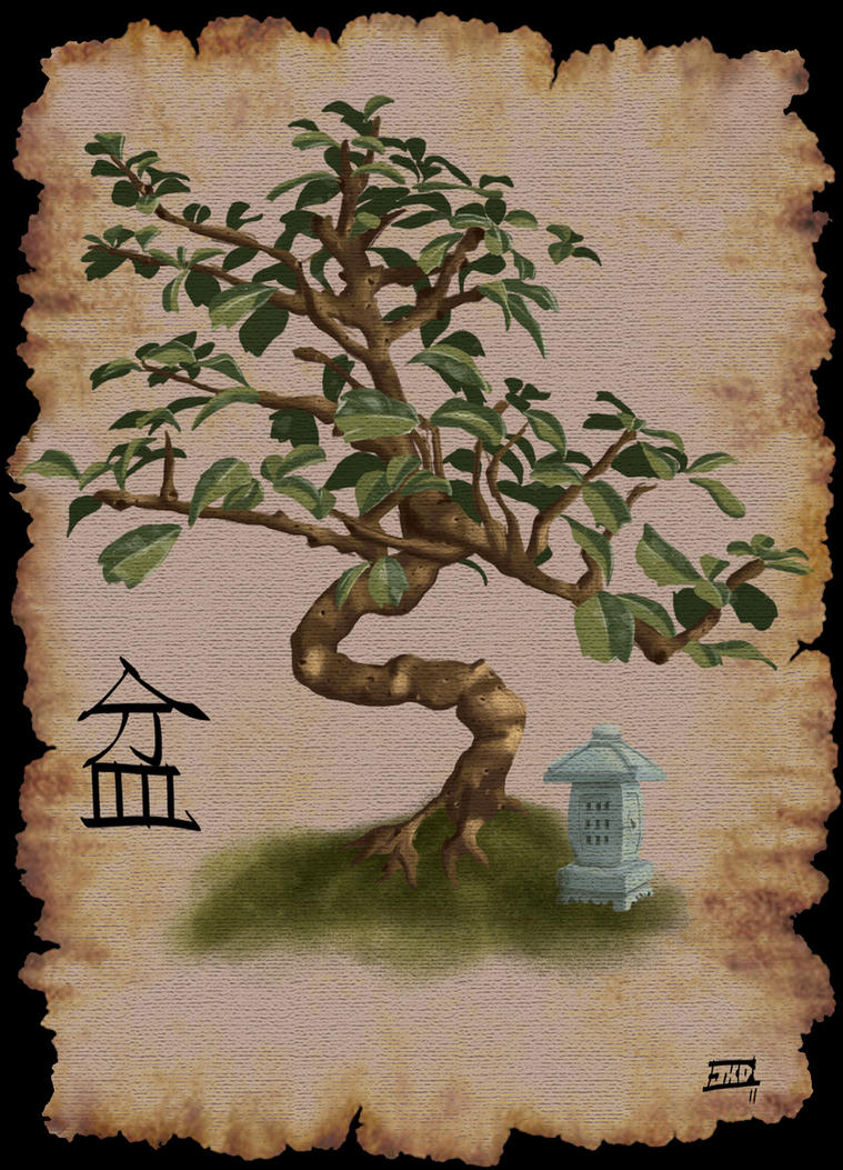Bonsai Tree by Jeff-Drylewicz on deviantART