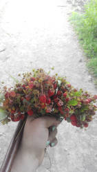 a lot of strawberries )