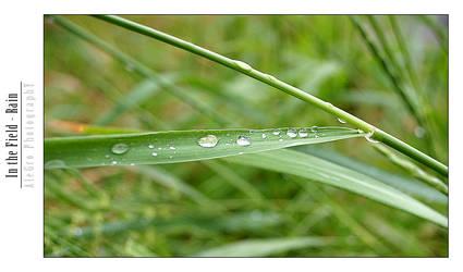 In the Field - Rain by Aleks-kun