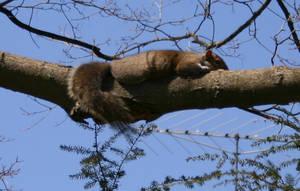 Squirrel Days of Spring by CentauriTiger