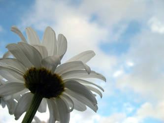 Daisy skys