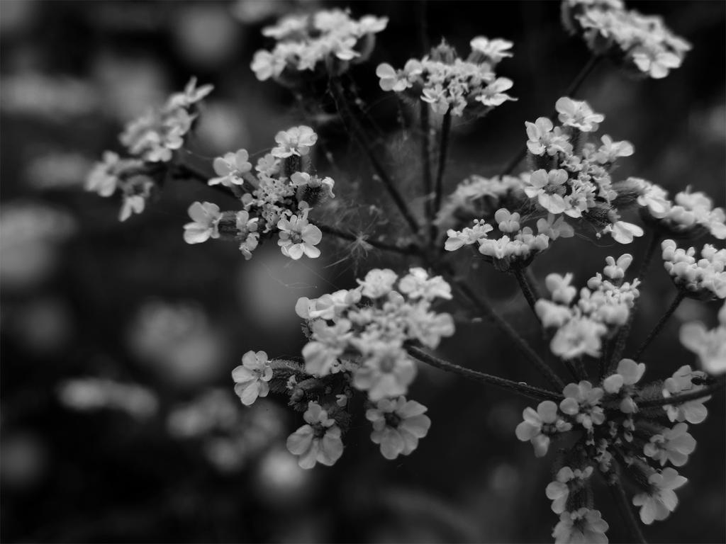 Something Pretty by Mahris-lense