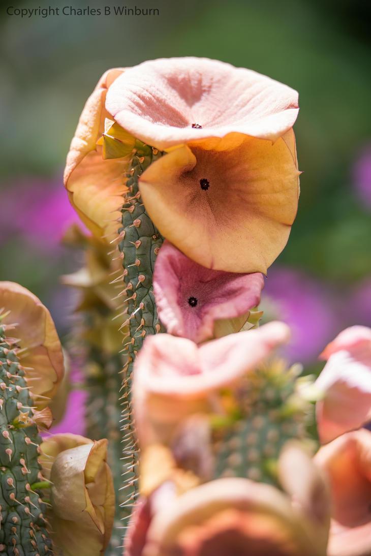 DC Botanic Garden Flowers 10 by CharlesWb