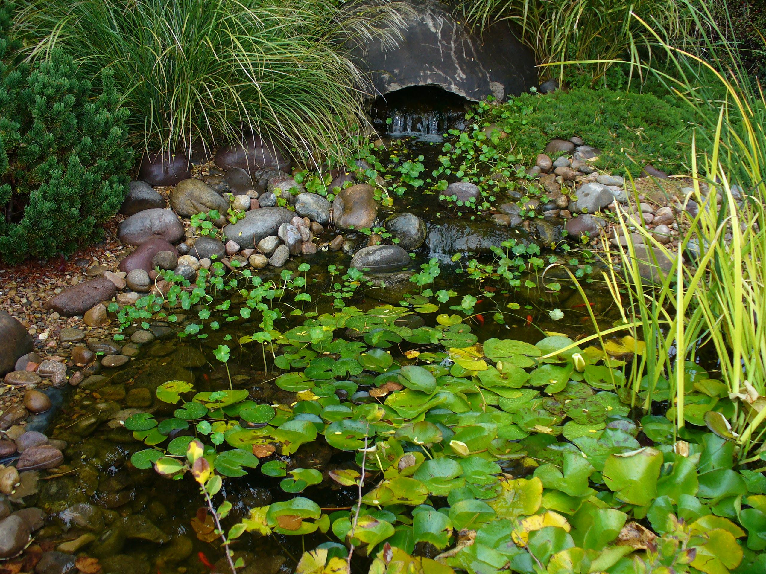 Fish pond 2 by autumnxlullaby on deviantart for Garden pond reddit