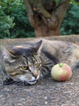 His Apple