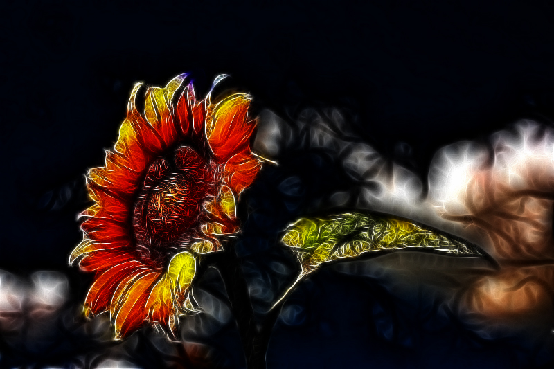Sunflower - Shaded 2