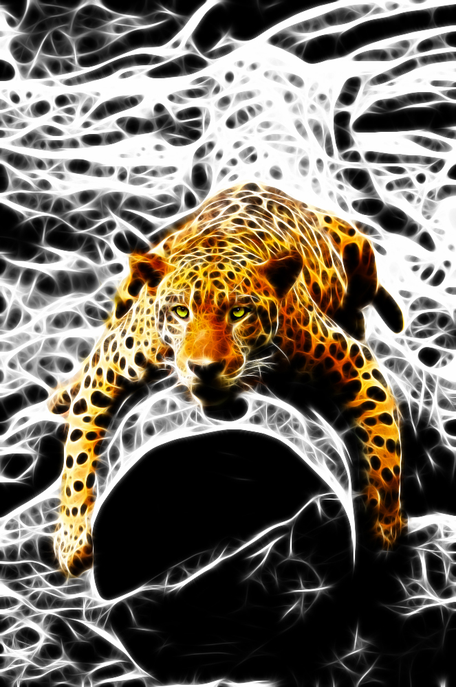 Jaguar .... Bit Lazy 1
