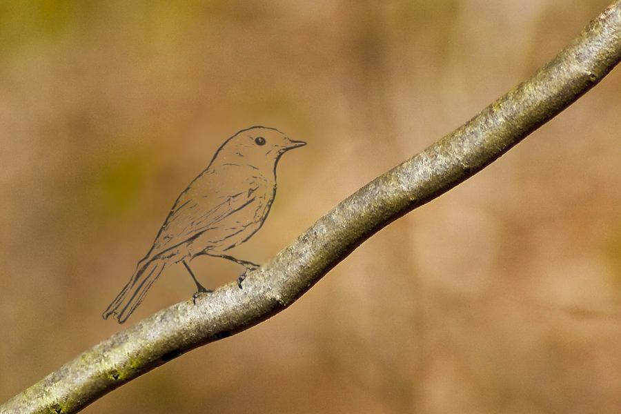 Pencil Bird