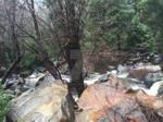 Beautiful Rocks at Bridalviel Creek