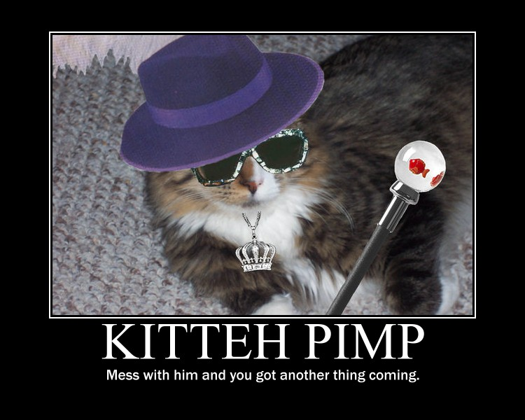 Pimp kitteh demotivational by Stickbomber