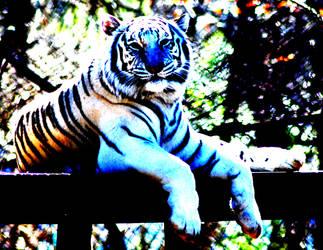Psychadelic Tiger