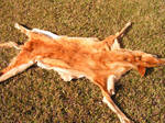 Dingo Pelt
