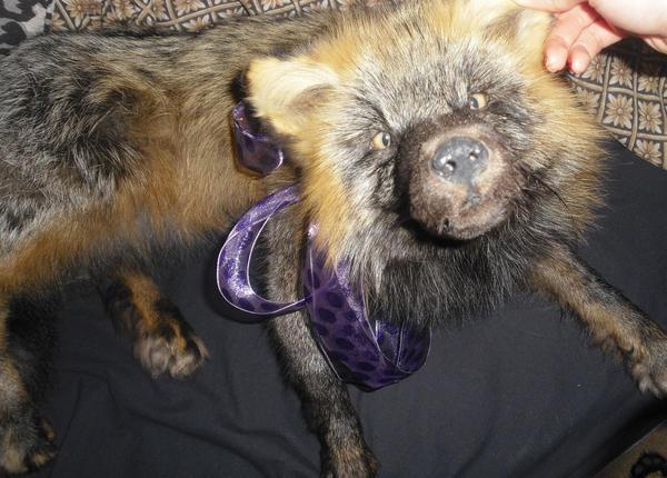 I love my fur zombie lol.