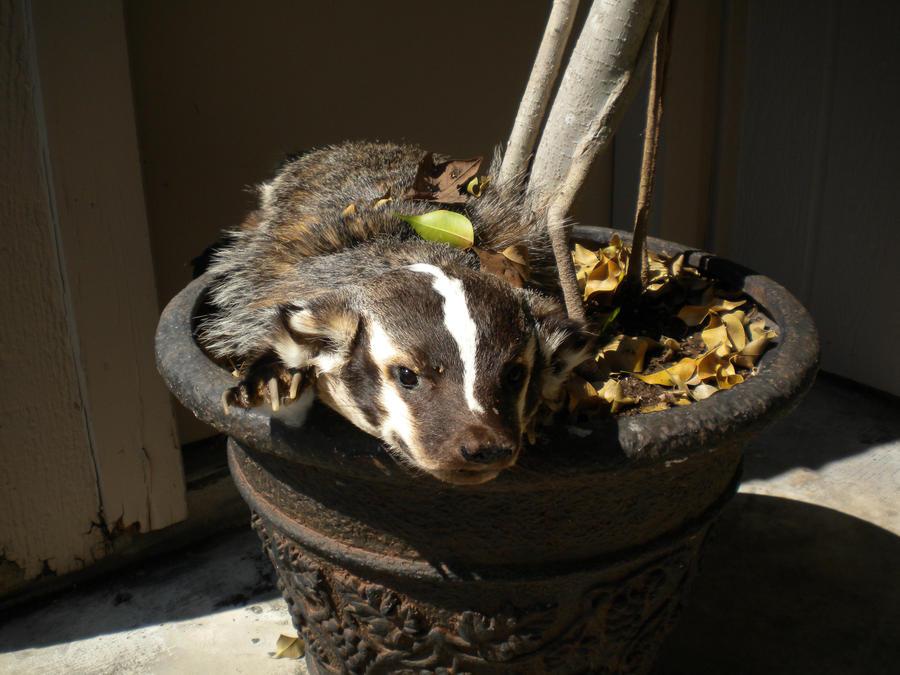 InuRyoko's Badger Plush
