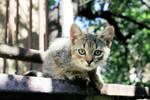 Kiara the Kitten