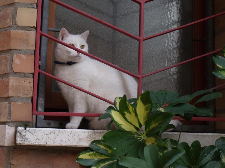 curious cat by BurningRoseBud