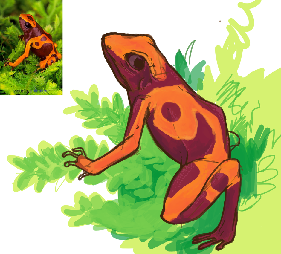 Frog Color Study by JequalNation