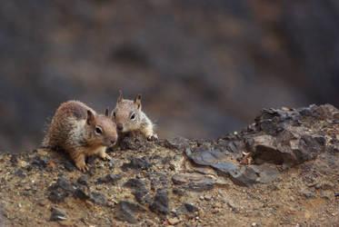 Squirrels by ScarletKoi