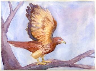 Red Tailed Hawk Watercolor by kaikaku