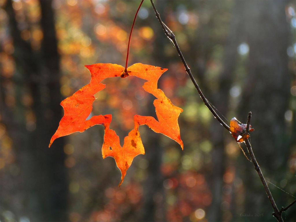 Through the Autumn Leaf by kaikaku