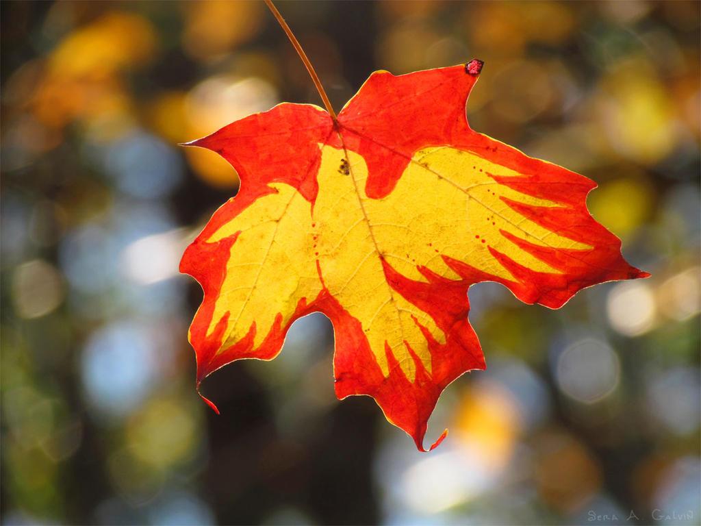 Fly or Fall by kaikaku