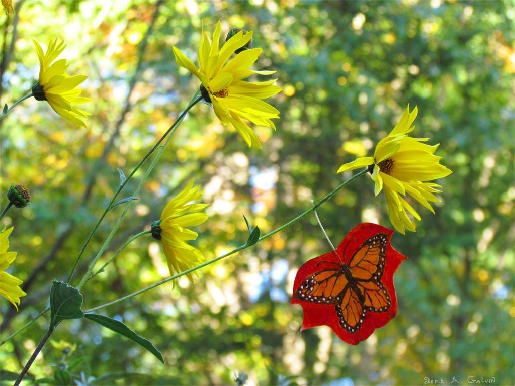 Monarch Butterfly Leaf 2 by kaikaku