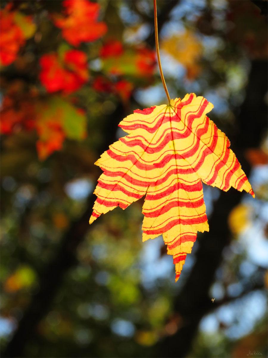 Lines and Leaves by kaikaku