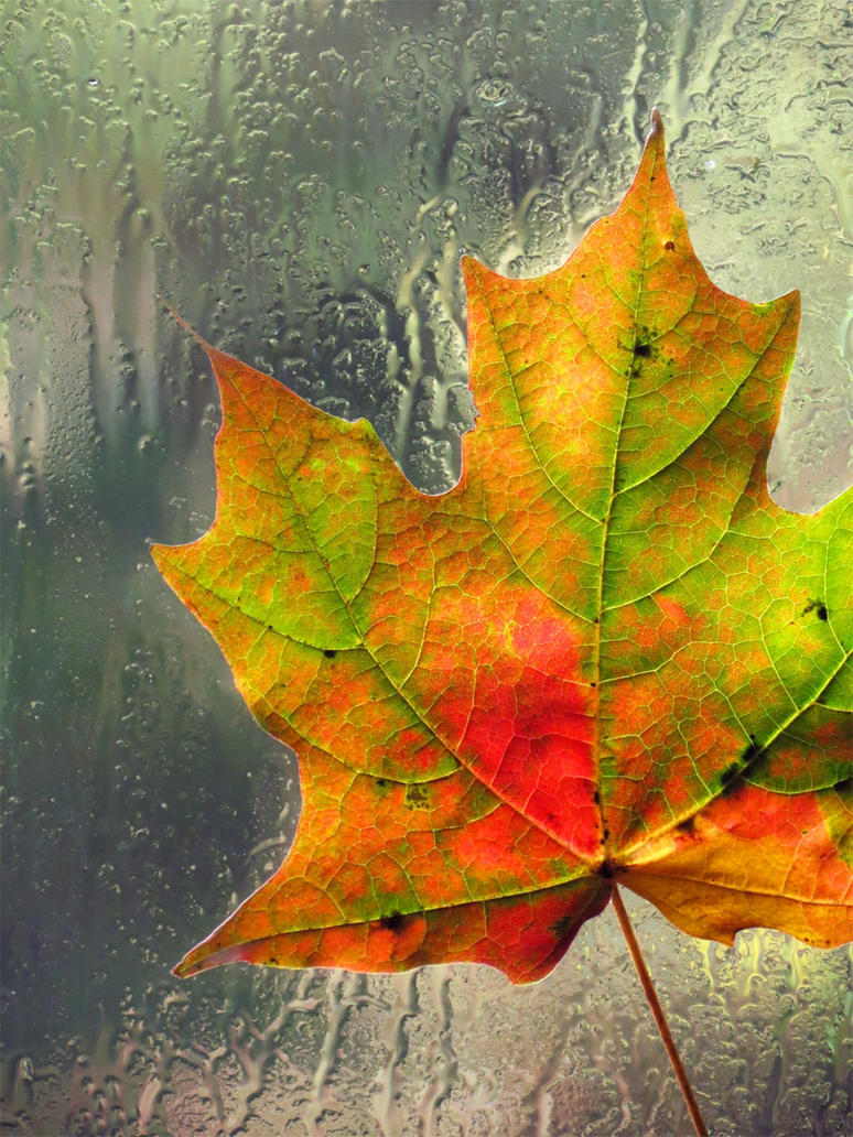 October Rain by kaikaku