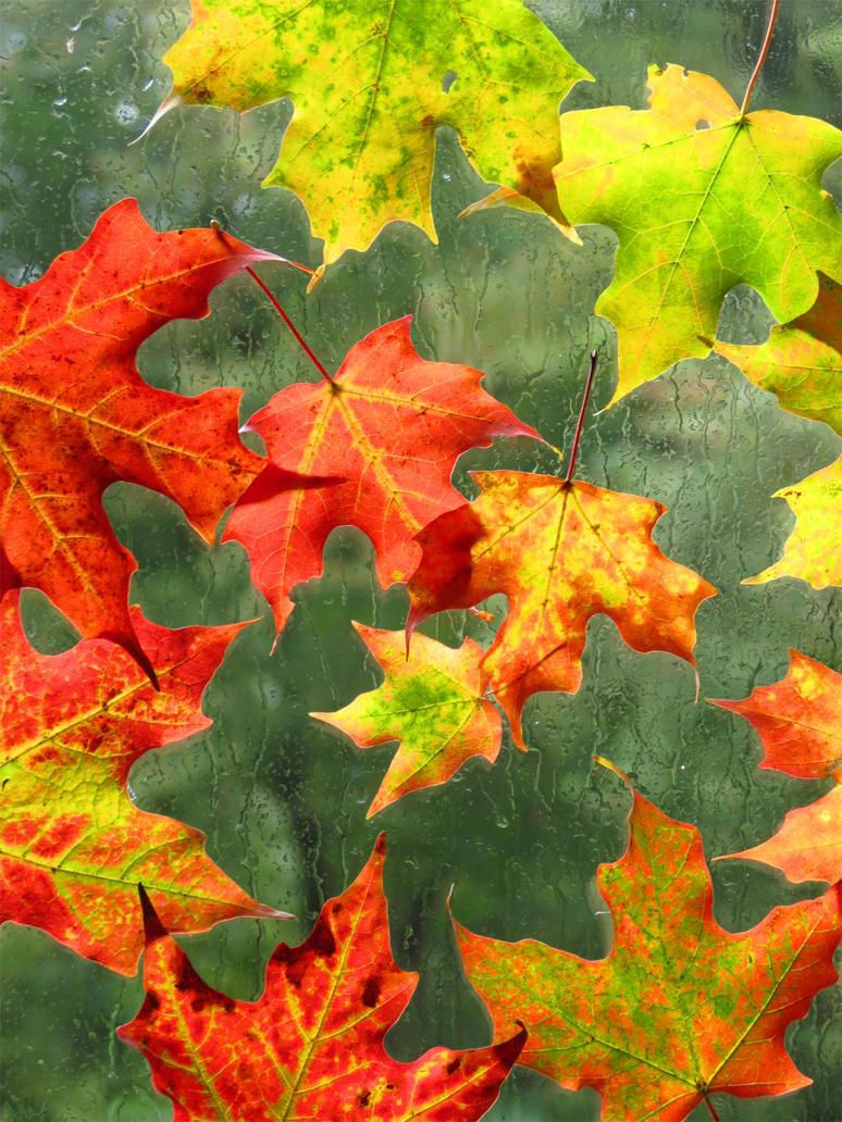 Spiraling leaves by kaikaku