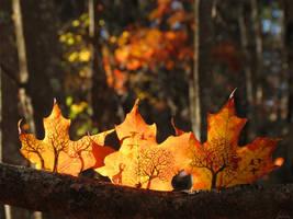 Three Autumn Scenes by kaikaku