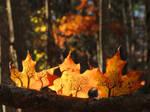 Three Autumn Scenes