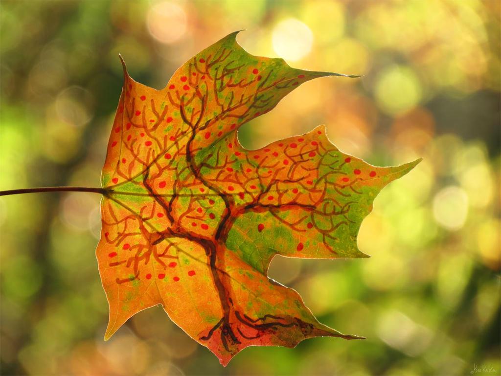 Breezy Autumn by kaikaku