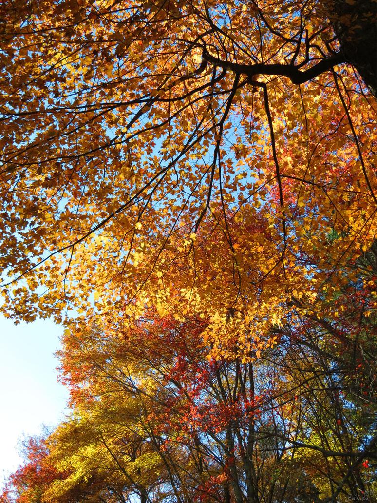 Autumn Leaves by kaikaku