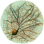 Dendritic tree and spines of an hippocampal neuron by lodeacca