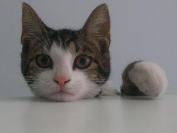 Cat 7 by WrittenPhotographs